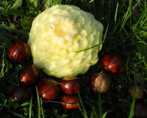 Kwiat z patisona, Wykonanie i foto Edyta Molińska